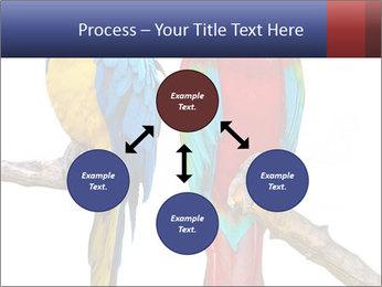 Big Ara Parrots PowerPoint Template - Slide 91