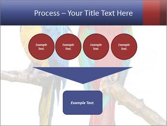 Big Ara Parrots PowerPoint Template - Slide 93