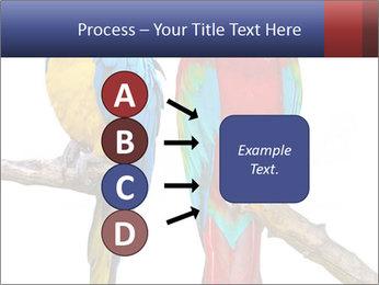 Big Ara Parrots PowerPoint Template - Slide 94