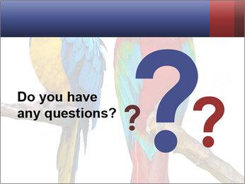 Big Ara Parrots PowerPoint Template - Slide 96