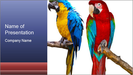Big Ara Parrots PowerPoint Template - Slide 1