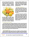 0000063599 Word Template - Page 4