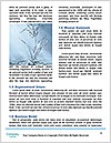 0000063629 Word Templates - Page 4