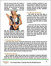 0000063636 Word Templates - Page 4