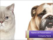 Bulldog and Gtey Cat PowerPoint Templates
