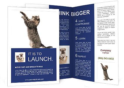 0000063677 Brochure Template