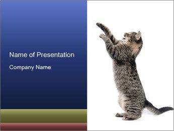 Active Cat PowerPoint Template - Slide 1