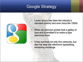 Active Cat PowerPoint Template - Slide 10