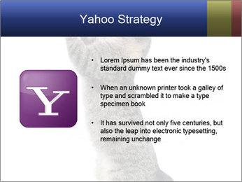 Active Cat PowerPoint Template - Slide 11