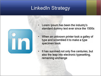 Active Cat PowerPoint Template - Slide 12