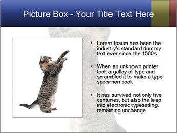 Active Cat PowerPoint Template - Slide 13
