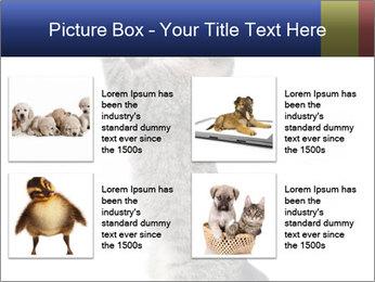 Active Cat PowerPoint Template - Slide 14