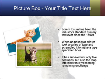 Active Cat PowerPoint Template - Slide 20