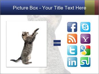 Active Cat PowerPoint Template - Slide 21