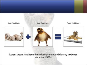 Active Cat PowerPoint Template - Slide 22