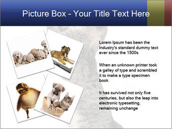 Active Cat PowerPoint Template - Slide 23