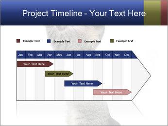 Active Cat PowerPoint Template - Slide 25