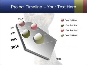 Active Cat PowerPoint Template - Slide 26