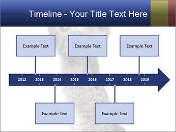 Active Cat PowerPoint Template - Slide 28