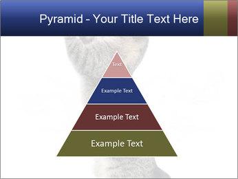 Active Cat PowerPoint Template - Slide 30