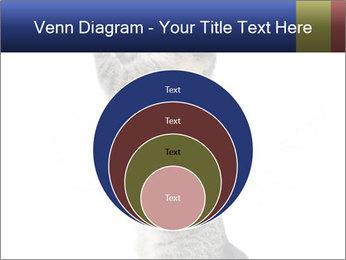 Active Cat PowerPoint Template - Slide 34