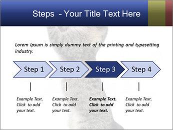 Active Cat PowerPoint Template - Slide 4