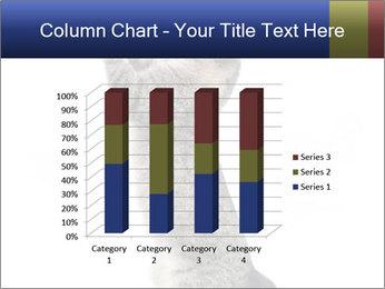 Active Cat PowerPoint Template - Slide 50