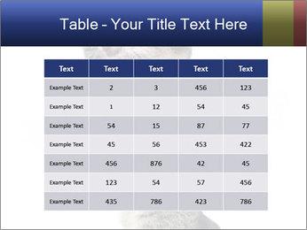 Active Cat PowerPoint Template - Slide 55