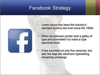 Active Cat PowerPoint Template - Slide 6
