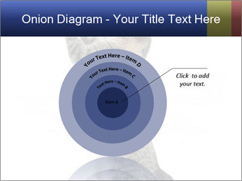 Active Cat PowerPoint Template - Slide 61