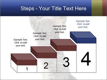 Active Cat PowerPoint Template - Slide 64
