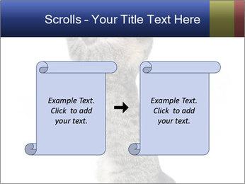 Active Cat PowerPoint Template - Slide 74