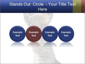 Active Cat PowerPoint Template - Slide 76