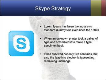 Active Cat PowerPoint Template - Slide 8