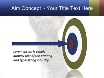 Active Cat PowerPoint Template - Slide 83