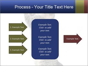 Active Cat PowerPoint Template - Slide 85