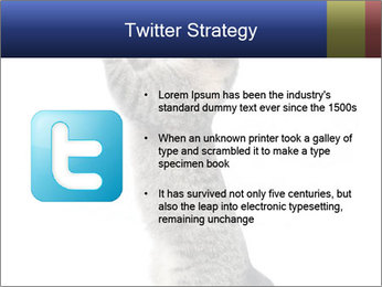 Active Cat PowerPoint Template - Slide 9