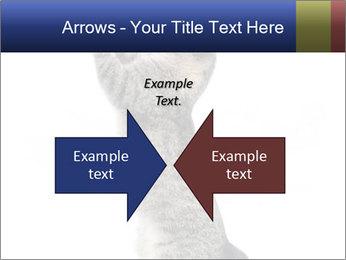 Active Cat PowerPoint Template - Slide 90