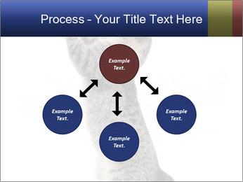Active Cat PowerPoint Template - Slide 91
