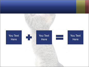 Active Cat PowerPoint Template - Slide 95