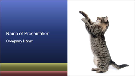 Active Cat PowerPoint Template