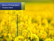 Yellow Field in Blossom PowerPoint Templates
