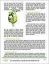 0000063811 Word Template - Page 4