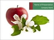 Apple and White Flowers PowerPoint Templates