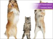 Pets Standing on Legs PowerPoint Templates