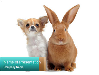 Puppy and Rabbit PowerPoint Template