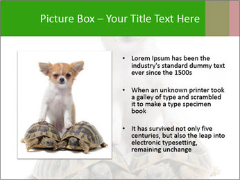 Puppy and Two Turtles PowerPoint Templates - Slide 13