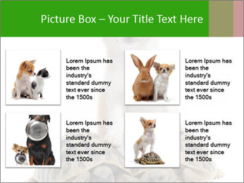 Puppy and Two Turtles PowerPoint Templates - Slide 14