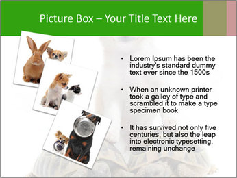 Puppy and Two Turtles PowerPoint Templates - Slide 17