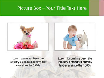 Puppy and Two Turtles PowerPoint Templates - Slide 18